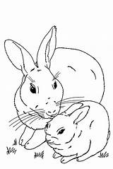 Bunny Coloring Rabbit Pages Baby Bunnies Cute Realistic Real Rabbits Mother Print Drawing Printable Easter Velveteen Clip Getdrawings Roger Drawings sketch template