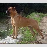 Dog Attacks On Humans | 1280 x 1115 jpeg 435kB