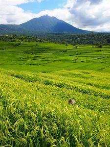 the rice fields of jatiluwih bali indonesia
