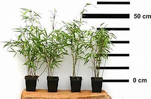 Pflanzen Die Schnell Hoch Wachsen : ziergr ser und weitere pflanzen g nstig online kaufen bei m bel garten ~ Michelbontemps.com Haus und Dekorationen