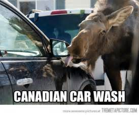 Funny Canadian Moose
