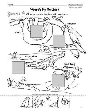 science worksheet forest animals rainforests