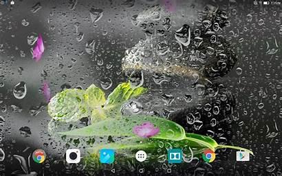 Zen Garden Google Screensaver Animated Smartphone