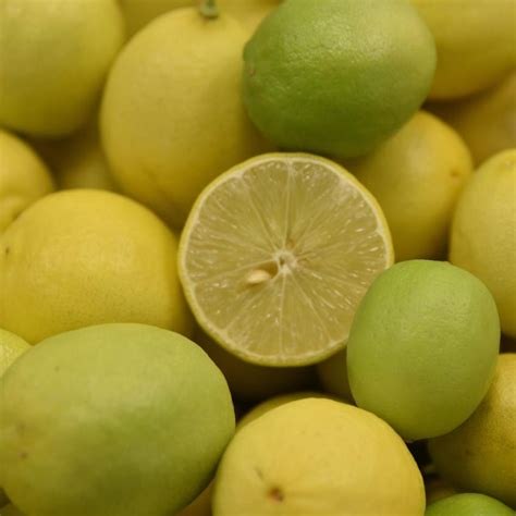 mexican key semi dwarf lime tree  winds growers