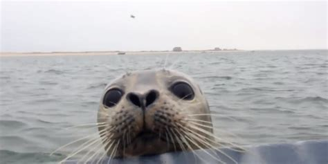 Adorable, Curious Seal Has No Fear Of Humans (video