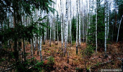 Осенью В Лесу Фото