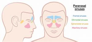 Sphenoid Sinusitis  One Of The Most Dangerous Sinus Infection