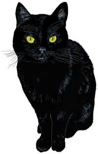 black cat all black cats are not alike the book