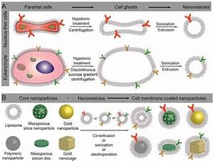 Preparation And Application Of Cell Membrane