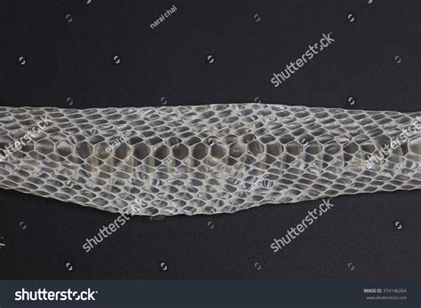shed snake skin display rattlesnake skin snake shedding skin stock photo