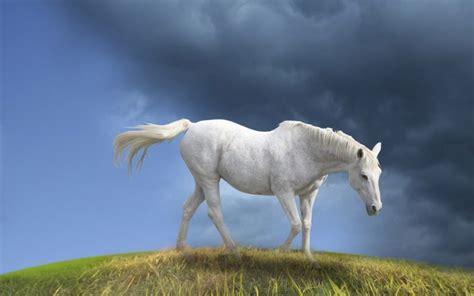 Hd Animal Wallpapers For Mac - desktop wallpaper for mac desktop wallpaper