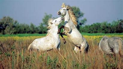 Wildlife Wallpapers Animals Wild Animal Nature Horses