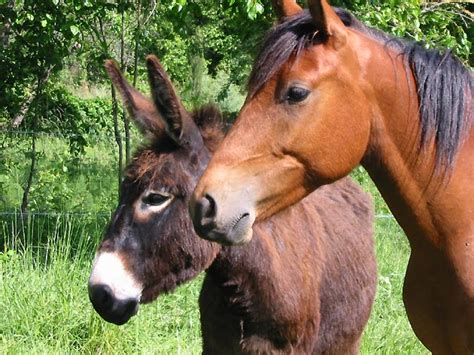 chambre d hotes provence photo ane et cheval