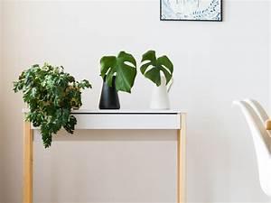 Zimmerpflanzen Auf Rechnung : zimmerpflanzen pflege und m glichkeiten ~ Themetempest.com Abrechnung