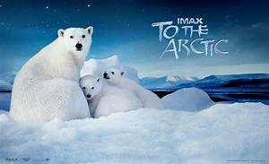 10 To The Arctic HD Wallpapers | Background Images ...  Arctic