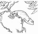 Chameleon Coloring Pages Printable Colouring Chameleons Animal Outline Sheets Adult Sketch Espio Creative Animals Tree Kindergarten Books Monkey Clip Kid sketch template