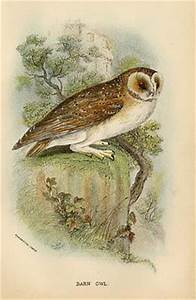 25 best images about owl illustrations on Pinterest ...