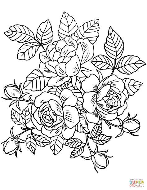 mewarnai gambar bunga harian nusantara