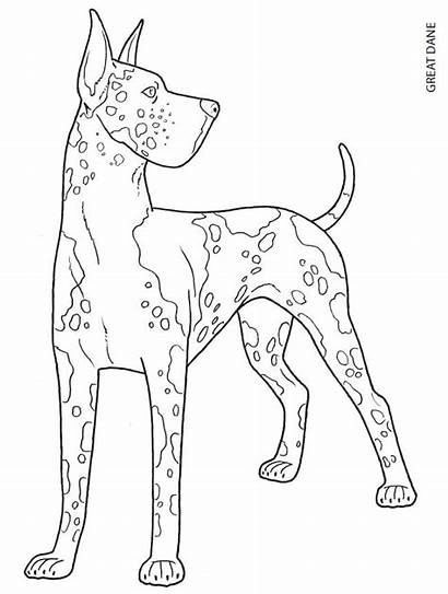 Dane Coloring Pages Dog Dogs Colouring Adult