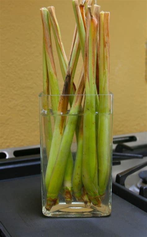 vegetables herbs   buy   regrow