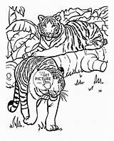 Tiger Coloring Pages Animal Animals Realistic Tigers Printable Adults Adult Drawing Printables Wuppsy Children Popular Getdrawings Library Cool Getcolorings sketch template