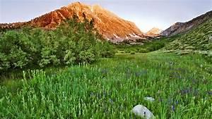 Nature, View, High, Definition, Meadows, California, Windows