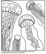 Coloring Aquarium Pages Bay Monterey Gellyfish Adults Printable Adult Jellyfish Sheets Cl Colouring Jellies Sea Drawings Template 79kb 821px sketch template