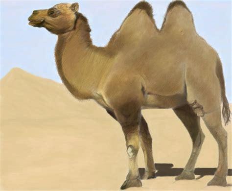 Camelo p/ Sant_ - Desenho de samantha678 - Gartic