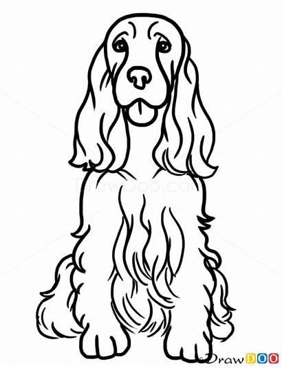 Spaniel Cocker Dogs Draw Springer English Dog