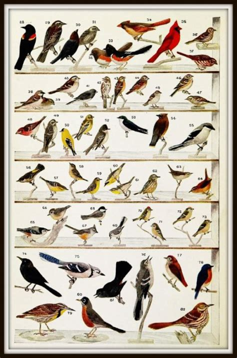 winter birds of southern united states