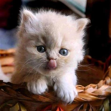 Cute Cats And Kittens  Pictures (part 2