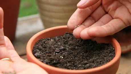 comment planter des graines en pot minutefacile