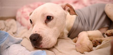 Philadelphia Animal Community Comes Together To  Ee  Rescue Ee