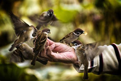 feeding birds alimentando aves diego cambiaso flickr