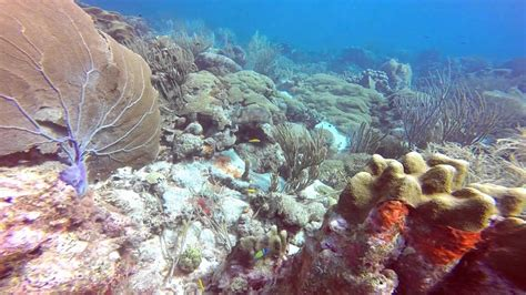 scuba diving  east point curacao youtube