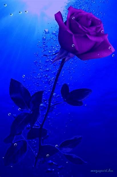 Rose Flower Fall Underwater Animated Flowers Gifs