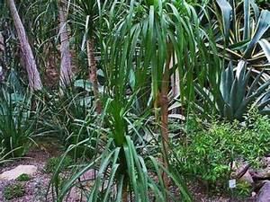 Entretien Plante Verte : le palmier d 39 arec une plante d 39 int rieur facile entretenir ~ Medecine-chirurgie-esthetiques.com Avis de Voitures