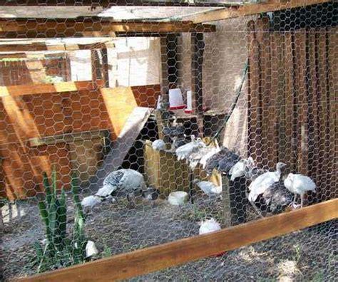 turkey coop designs coop design