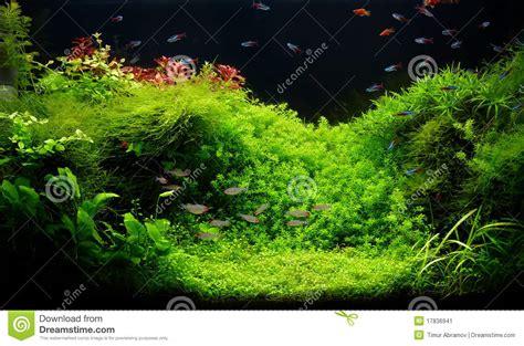aquarium eau douce tropical aquarium d eau douce de nature dans le type de takasi amano image stock image 17836941