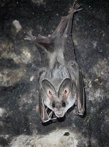25 of the cutest bat species | MNN - Mother Nature Network