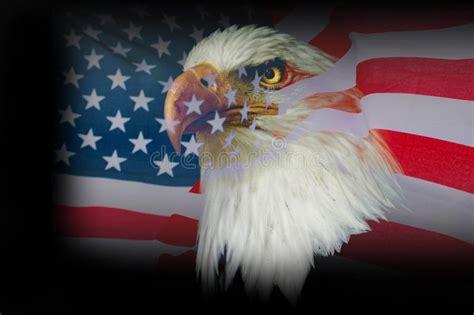 1,379 American Eagle Flag Photos - Free & Royalty-Free ...