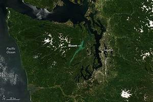 Does Puget Sound Need A Diet  Concerns Grow Over Nutrients