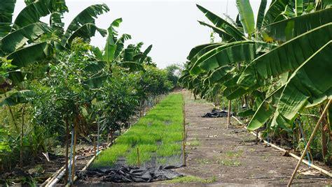 สืบสานเกษตรทฤษฎีใหม่ ถวายในหลวง ที่จังหวัดลำพูน