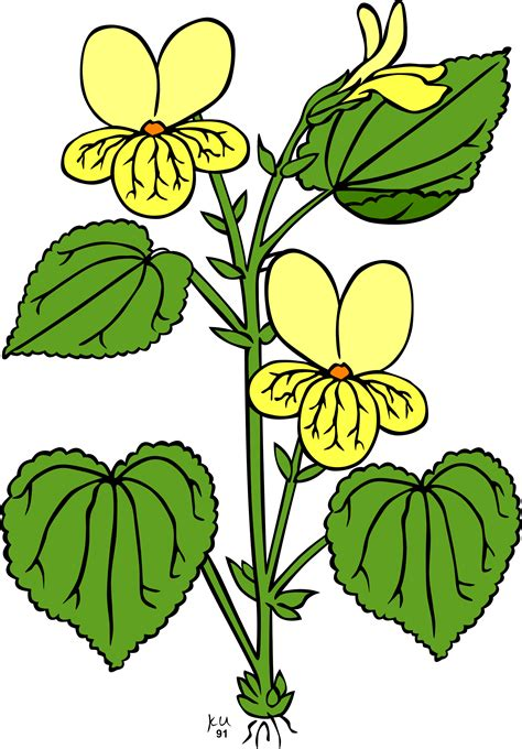 Library Of Plant A Flower Clipart Freeuse Stock Png Files