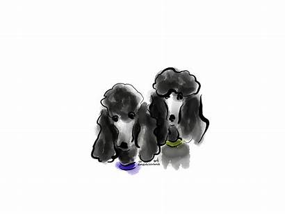 Poodle Dog Drawings Dogs Standard