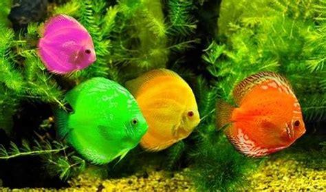 h 244 pital les 233 tonnants bienfaits d un aquarium passionsant 233 be