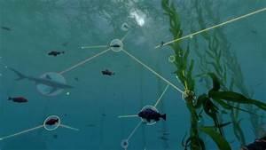 Video  Coastal Food Webs