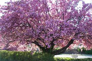 Identifying Mystery Floral Trees