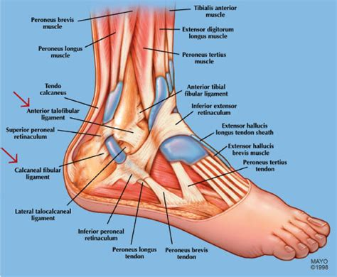Pediatric Sports-Related Injuries of the Lower Extremity ...