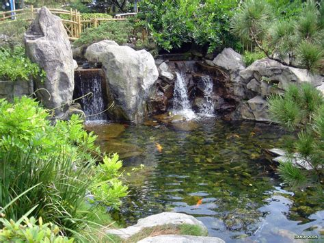 pictures of koi ponds koi pond wallpapers wallpaper cave